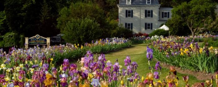 Presby Memorial Iris Gardens Welcome Spring