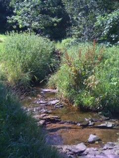 Yantacaw Brook Park for Meditation