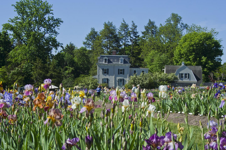 Iris Gardens Montclair Nj Garden Ftempo
