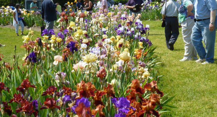 Presby Memorial Iris Gardens Commemorate 90 Years