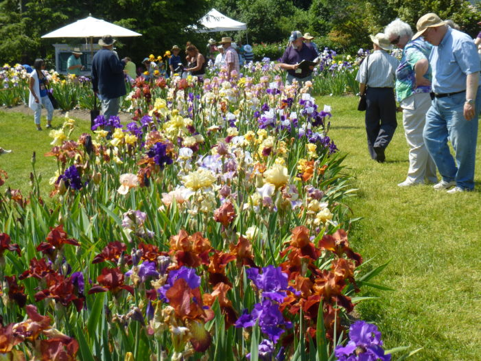 Presby Memorial Iris Gardens Commemorate 90 Years