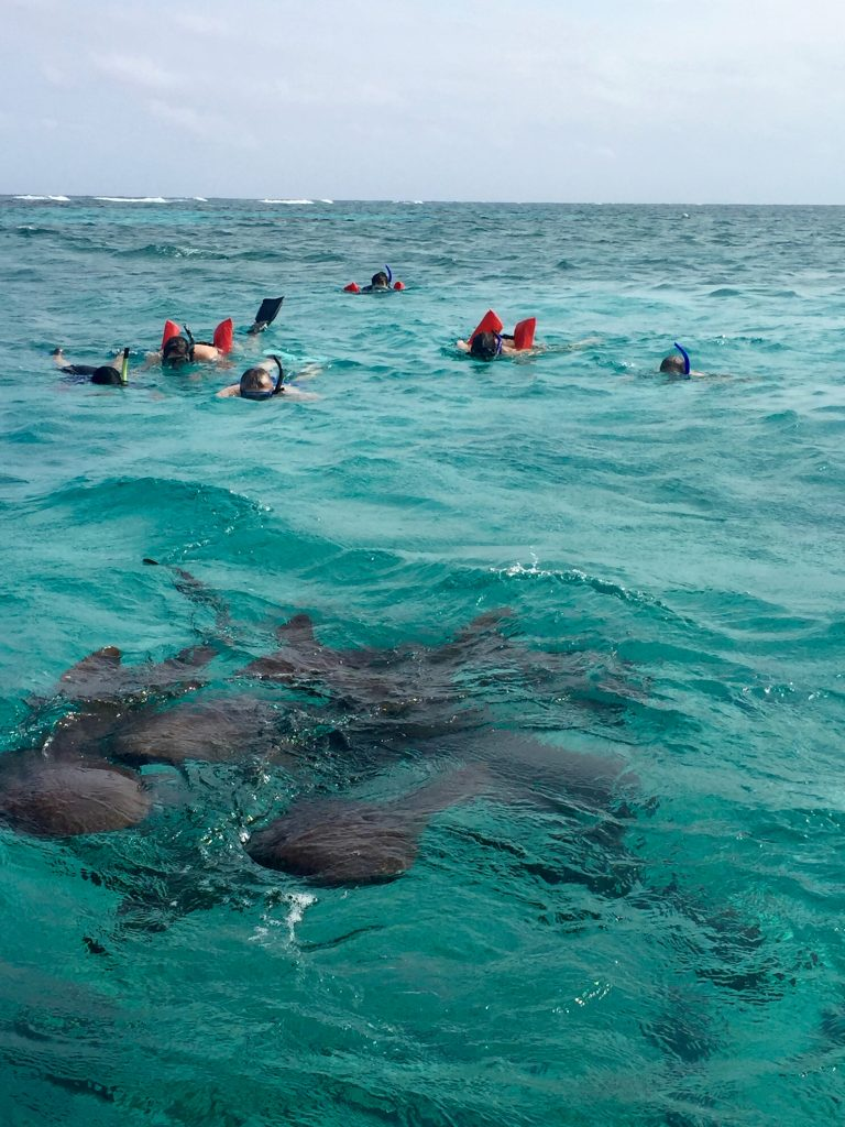 After installing 36 panels, we were able to enjoy some time snorkeling the Belize barrier reef. We were able to snorkel alongside nurse sharks as our tour guide fed them from the boatside!